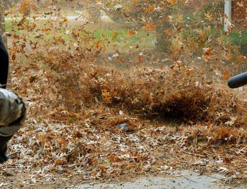 Кои са най-добрите начини за почистване през есента?